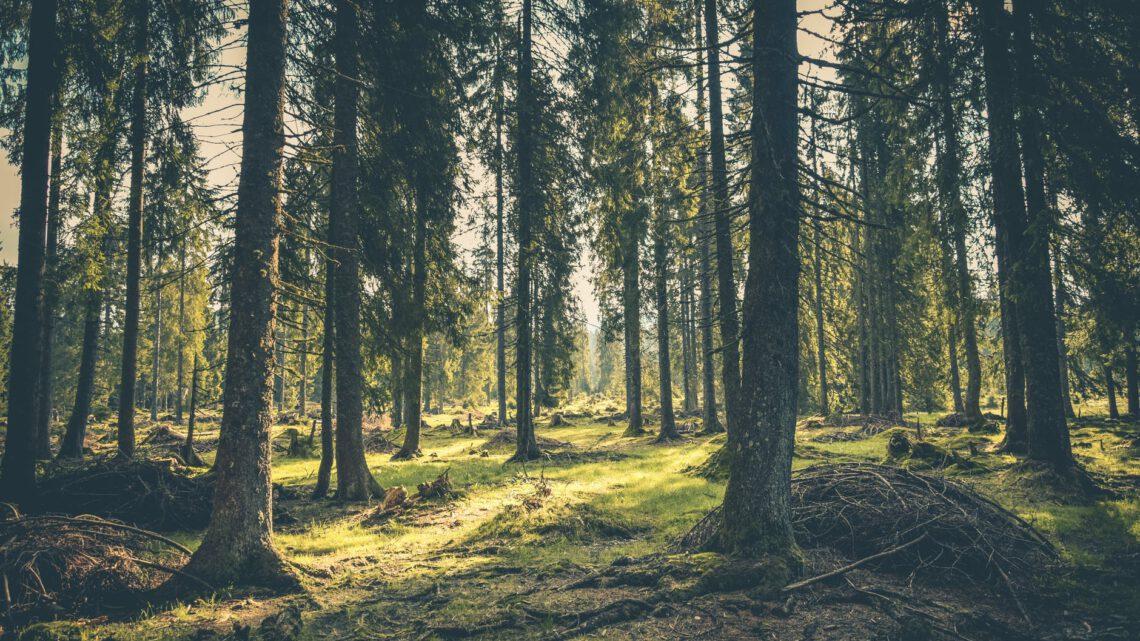 Tips voor jouw vakantie in de Ardennen