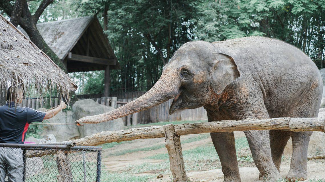 ID:1664 Burgers' Zoo korting